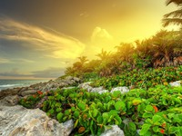Sunset at the jungle of Caribbean Sea in Mexico. Фото Patryk Kosmider - Depositphotos