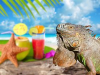 Iguana on Mexico tropical beach cocktail coconut. Фото TONO BALAGUER SL - Depositphotos