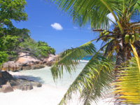 Palm tree on empty beach, Grand Soer, Seychelles. Фото romancenek - Depositphotos