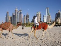 ОАЭ. Дубай Марина. Camels on the Beach in Dubai. Фото Philip Lange - Depositphotos