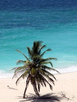 Барбадос. Palm tree, sand, beach and sea in Barbados, caribean. Фото Валерий Шанин - Depositphotos