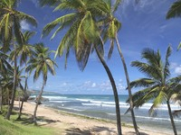 Барбадос. The beach at Bathsheba, on the eastern coast of Barbados, Caribbean. Фото Verena Matthew - Depositphotos