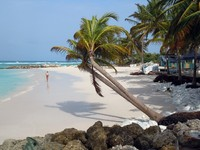 Барбадос. Beach with runner and palm trees in island Barbados. Фото Валерий Шанин - Depositphotos
