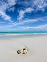 Барбадос. Lonely beach - Caribian summer. Фото Alexander Kirch - Depositphotos