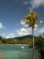 Сент Винсент и Гренадины. Coconut tree with native fishing boat friendship bay bequia. Фото Robert Lerich - Depositphotos