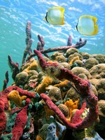 Colorful sea sponges and tropical fish in a coral reef, Caribbean sea. Фото vilainecrevette - Depositphotos