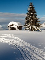 Small Hut and Fir Tree on the Top of the Mountain in French Alps. Фото Andrey Omelyanchuk - Depositphotos