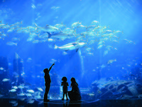 ОАЭ. Дубай. Atlantis, The Palm - Marine & Waterparks - Marine Habitats - Ambassador Lagoon