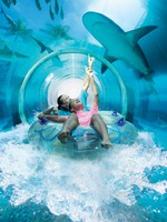 ОАЭ. Дубай. Atlantis, The Palm - Marine & Waterparks - Aquaventure Waterpark - Shark Tunnel