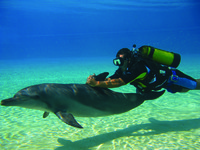 ОАЭ. Дубай. Atlantis, The Palm - Marine & Waterpark - Dolphin Bay - Dolphin Scuba