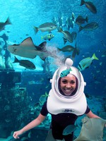 ОАЭ. Дубай.Atlantis, The Palm - Marine & Waterparks - Marine Animal Adventures - Shark Safari