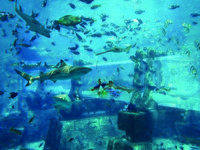 ОАЭ. Дубай. Atlantis, The Palm - Marine & Waterparks - Aquaventure Waterpark - Shark Tunnel Father & Son