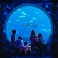 ОАЭ. Дубай.  Atlantis, The Palm - Guest Activities - Kids Club - Kids Club Amphitheatre