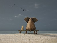 Elephant and dog sit on a deserted beach. Фото mike_kiev - Depositphotos