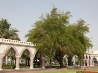 ОАЭ. Аль Айн. Park in the city of Al Ain, Abu Dhabi. Фото philipus - Depositphotos