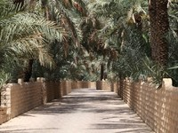 ОАЭ. Аль Айн. Date Palm Trees in the Oasis of Al Ain. Фото Philip Lange - Depositphotos