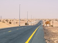 ОАЭ. Camel on a desert road. Фото peterfuchs - Depositphotos