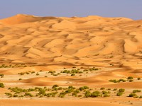 ОАЭ. Пустыня Руб-эль-Хали (Rub' al Khali). Empty Quarter Wadi. Фото David Steele - Depositphotos