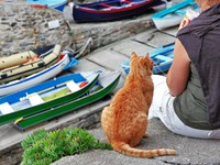 Греция. Санторини. Friendly cat in Greece. Фото  Maugli - Depositphotos