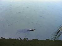 Клуб путешествий Павла Аксенова. Индонезия. О.Бали. Ayodya Resort Bali. Пруд. Фото Павла Аксенова