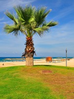 Израиль. A palm at the beach. Herzlia (Israel). Фото Oleg Zaslavsky - Depositphotos