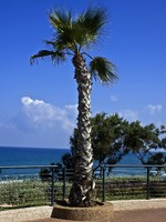 Израиль. Netanya. Palm tree at the sea embankment. Фото Viacheslav Belyaev - Depositphotos