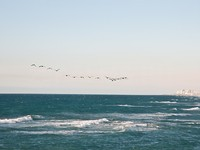 Израиль. Тель-Авив. Flock of birds flying over the Mediterranean. Israel. Фото Larisa Pakhtusov - Depositphotos