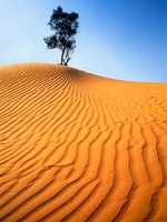 Израиль. Lonely tree at dune top, in Desert Negev in Israel. Фото Alexandr Makarenko - Depositphotos