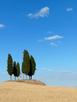 Италия. Тоскана. Trees in a clay landscape in Tuscany, Italy. Фото pljvv1 - Depositphotos