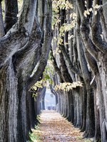 Италия. Тоскана. Tree outside Lucca, Italy. Фото Giovanni Gagliardi - Depositphotos