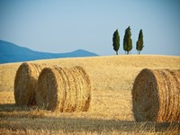 Италия. Тоскана. Scenic view of typical Tuscany landscape. Фото pitrs10 - Depositphotos