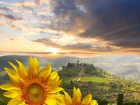 Италия. Тоскана. Chianti vineyard landscape with sunflowers in Tuscany, Italy. ФотоTomas Marek - Depositphotos