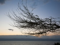 Иордания. Мертвое море. Jordan. Dead Sea. Tree brunch on Dead Sea sunset, Jordan. Фото vvoennyy - Depositphotos