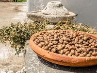Марокко. Аргановое дерево. Argan fruits in a Women Cooperative in Essaouira. Фото Luisa Puccini - Depositphotos
