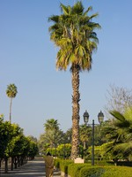 Марокко. Марракеш. Park in Marrakech with palms. Фото jahmaica Depositphotos