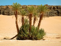 Марокко. Пустыня Сахара. Palm trees and natural landscape in Morocco. Фото piccaya - Depositphotos