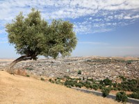 Марокко. Фес. Tree over the old medina of Fes, Morocco, North Africa. Фото Philip Lange - Depositphotos