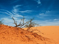 Марокко. Desert of North Africa, sandy barkhans. Фото Larysa Kryvoshapka - Depositphotos