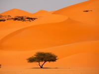 Марокко. Tree in the desert. Фото Dmitry Saparov - Depositphotos