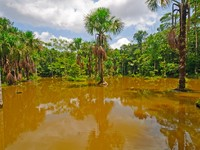 Flooded lagoon in the Peruvian Amazon Rain Forest Near the Napo River. Фото Steven Prorak - Depositphotos