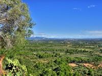 Испания. Коста Дорада. Olive groves in Costa Daurada, Spain. Фото Juan moyano - Depositphotos