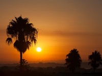 Испания. Коста Дорада. Palm trees silhouettes at sunset in Spain, Costa Dorada. Фото aragami12345 - Depositphotos