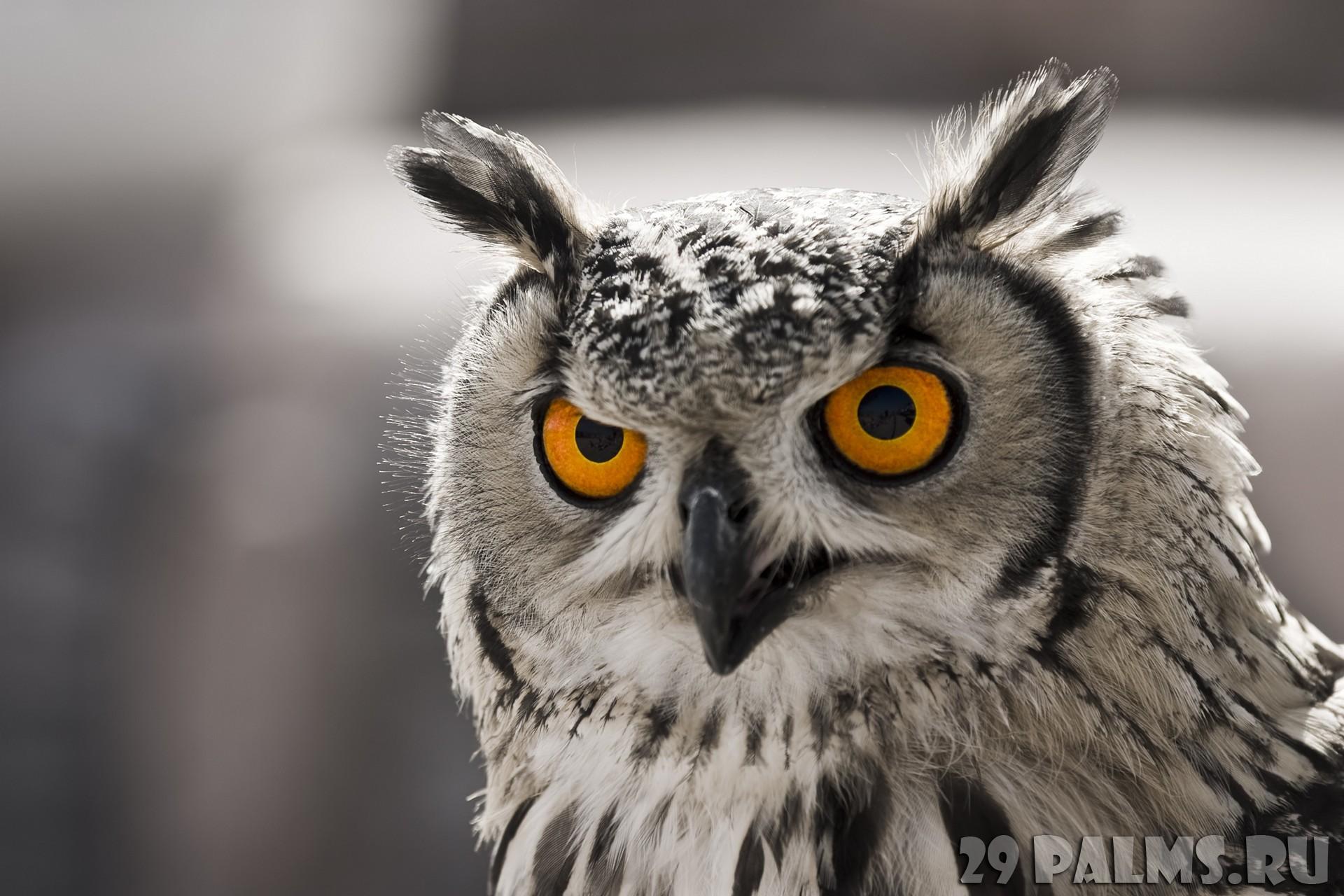 Аватарка пользователя ❤ Owl