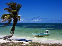 A palm and a boat in the wind in the blue lagoon in sian kaan mexico. Фото Luca Mason - Depositphotos