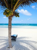 Coconut palm at perfect Caribbean beach in Tulum Mexico. Фото shalamov - Depositphotos