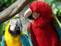 Parrots in the zoo. Фото rebekka ivacson - Depositphotos
