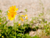 Yellow flowers and a Checkered White butterfly in the New Mexico desert. Фото Jim Pruitt - Depositphotos