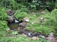 Гренада. Green forest area and small river in Grenada. Фото Валерий Шанин - Depositphotos